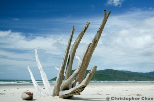 Tree Trunks on Beach. 1/400 sec, f/5.0 at ISO100.